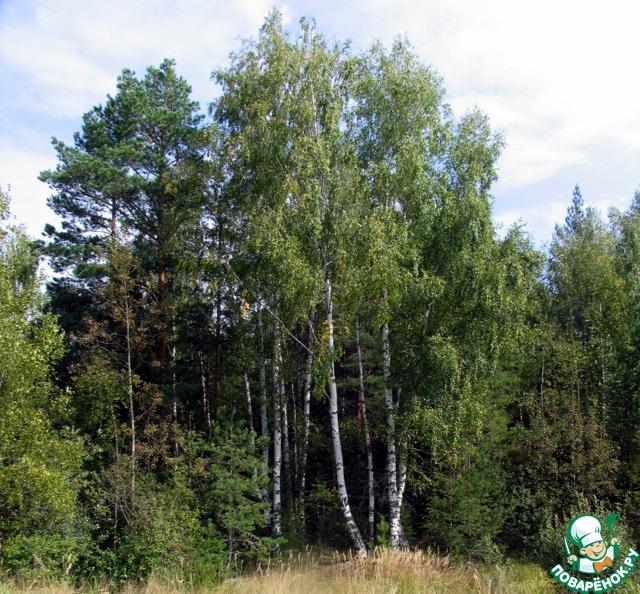 Лес, в котором я собирала грибы.